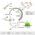 Evolutionary history of microbe-microbe and plant-microbe interactions (cropped).png