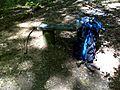 FLT M01 4.31 mi - Bench near Wolf Run Bridge - panoramio.jpg