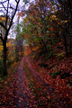 Fall-leaf-road - West Virginia - ForestWander.png