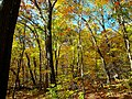 Fall Foliage in Devils Lake State Park - panoramio.jpg