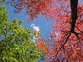 Fall sky (1698848144).jpg