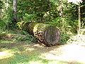 Fallen Tree (2451075658).jpg