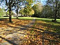 Fallen leaves in a small park, Bryncethin (geograph 5958812).jpg