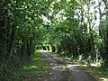 Farm road to Ty Mawr and Llys Elen - geograph.org.uk - 890426.jpg