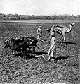 Farmers palestine 1912.jpg
