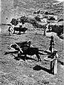 Farmers palestine 2 1912.jpg