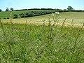 Farmland, north of Downton - geograph.org.uk - 183920.jpg