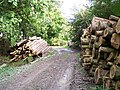 Felled Timber, Rowborough Bottom - geograph.org.uk - 75844.jpg