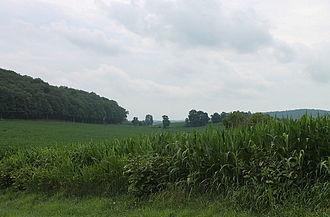 Mahoning Township, Montour County, Pennsylvania - Corn or sorghum field in Mahoning Township, Montour County, Pennsylvania