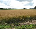 Fields west of St Michael's church - geograph.org.uk - 1406545.jpg