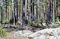 Finland - panoramio (23).jpg