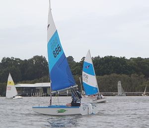 Firebug (dinghy) - Firebug Dinghies sailing at Concord Ryde Sailing Club