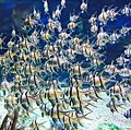 Fish at Disney World Orlando (33738778921).jpg