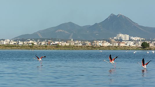 Sight on lake of Tunis with flamingos