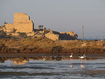 Flamingo and Atlit fortress.JPG