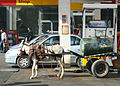 Flickr - DavidDennisPhotos.com - Donkey Fueling Up.jpg