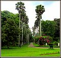 Flickr - ronsaunders47 - THE BOTANICAL GARDENS IN KANDY .SRI LANKA ..jpg