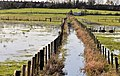 Flooding, Portadown (2) - geograph.org.uk - 2679772.jpg