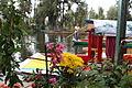 Flor de xochimilco.JPG