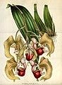 Flore des serres et des jardins de l'Europe - vol. 08 - page 755.jpg