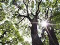 Floresta nacional de ipanema.jpg