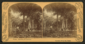 Florida, harvesting the cocoanuts (coconuts), by Barker, George, 1844-1894.png