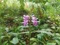 Flower (43436441242).jpg