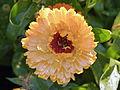 Flower (6084864254).jpg