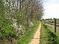 Flowering shrubs along the Bure Valley Railway - geograph.org.uk - 1244691.jpg