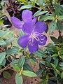 Flowers - Uncategorised Garden plants 01.JPG