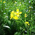 Flowery bloom.jpg