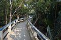 Footbridge - Sundarban Biodiversity and Interpretation Area - Taki - North 24 Parganas 2015-01-13 4660.JPG