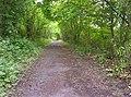 Footpath - geograph.org.uk - 173171.jpg