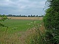 Footpath across Farmland - geograph.org.uk - 206325.jpg