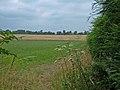 Footpath across Farmland - geograph.org.uk - 206325.jpg