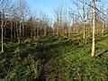 Footpath around Beechwood Estate - geograph.org.uk - 1622695.jpg