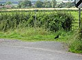 Footpath from Hethelpit Cross - geograph.org.uk - 933208.jpg