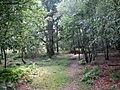 Footpath through Beacon Ash - geograph.org.uk - 522002.jpg