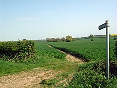 Footpath through cornfield - geograph.org.uk - 416265.jpg