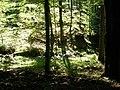 Forêt au col du Donon (Grandfontaine) (1).jpg