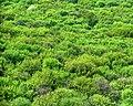 Forest - panoramio - paulnasca (93).jpg