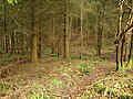 Forest of Dean, Reddings Inclosure - geograph.org.uk - 1724868.jpg