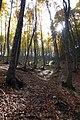 Foresta autunnale della Maiella - panoramio.jpg