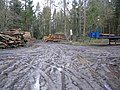 Forestry operations at Eastleigh Wood - geograph.org.uk - 348156.jpg