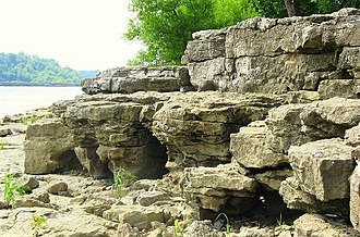 Falls of the Ohio State Park - Fossil formations (Devonian Jeffersonville Limestone) found along the shores of the Ohio River.