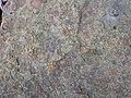 Fossiliferous sandstone (Byer Sandstone, Lower Mississippian; Dugway Outcrop, Newark, Ohio, USA) 5 (32643929631).jpg