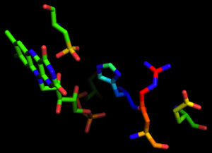 NADH peroxidase - Four residues essential for active site functionality in NADH Peroxidase, Adapted from PDB 2NPX