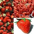 Fruit Fraise.jpg