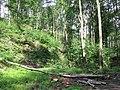 Góry Opawskie, Rezerwat Cicha Dolina 04.jpg