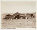 Gamla Biskra, nomadläger, Algeriet - Hallwylska museet - 107943.tif